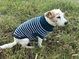 Dog Stripe Sweater