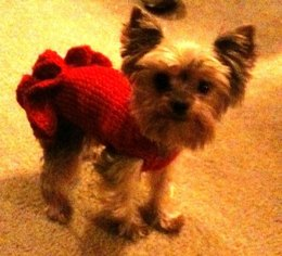 "Sofie's Tiny Dog Knit ""Party Dress"""