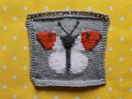 Orange Tip Butterfly Intarsia Square