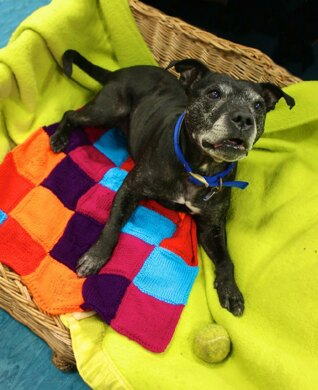 Purly Pawprint Patchwork Blanket