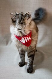 Pet neckerchief