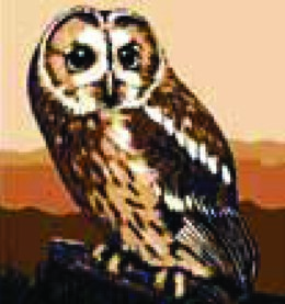 Collection D'Art Brown Owl Tapestry Kit