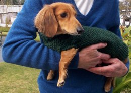 Lena's Miniature Dachshund Dog Sweater