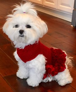 Lady in Red Doggy Dress