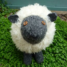 Shuggie Sheep