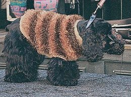 Knit Dog Fur Coat in Lion Brand Fun Fur and Wool-Ease - 30240