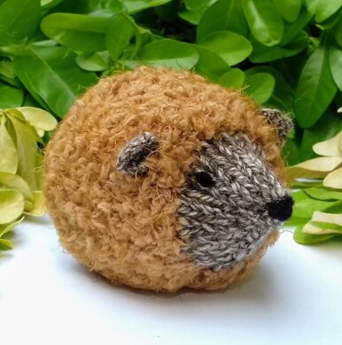 Hedgehog - Chocolate Orange Cover