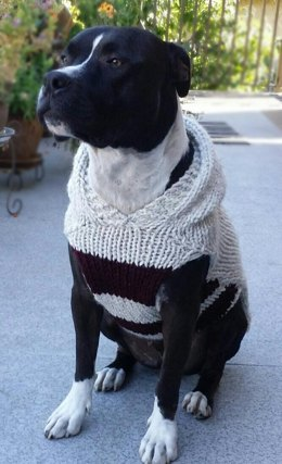 Pitty Perfect Sweater