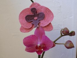Exotic flowers: Orchid