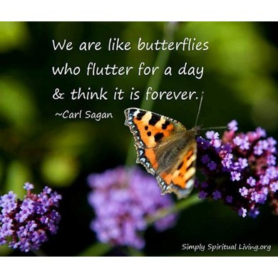 We Are Like Butterflies Mittens