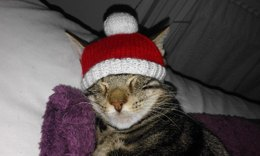 Knitted Christmas jumpers and hat for pussy cats!