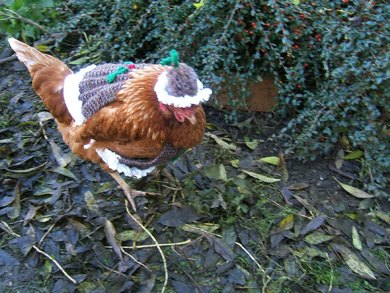 """""""Christmas Pudding"""" Chicken Coat With Matching Hat"""