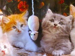 Sugar Mouse Cat Toy
