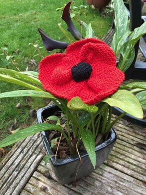 Large Red Poppy