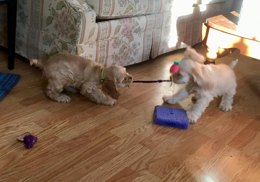 Two Chewy Pet Toys for the Young