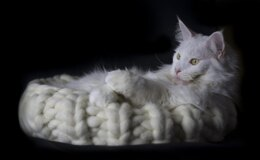 Giant Wool Kitty Bed