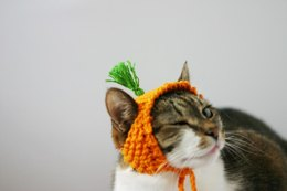 A Carrot Hat for a Cat