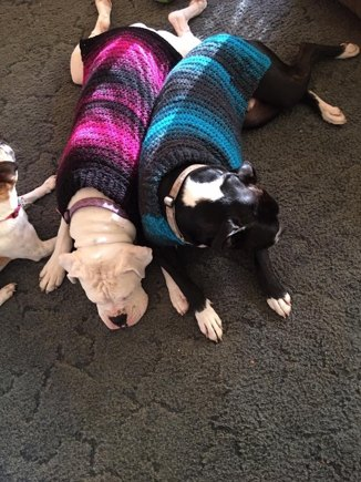 Boxer Dog Sweater Crochet Project By Laura L Lovecrochet