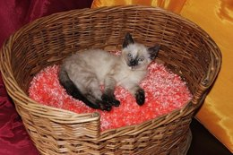 Cat Basket Fluffy Cushion (Pillow)