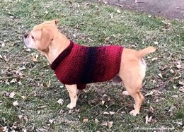 Easy Dog Sweater Medium
