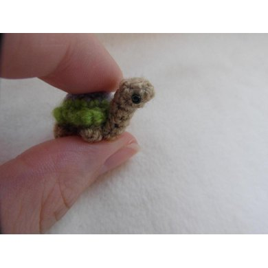 Oh, so tiny! Turtle
