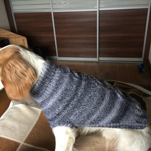 70b640af62e Prep Dog Sweater in Lion Brand Wool Ease - L32372