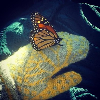 Butterfly Wish Mittens