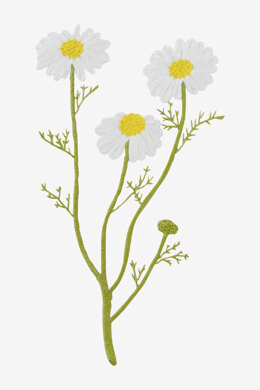 Camomile in DMC - PAT0321 - Downloadable PDF