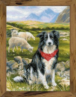 Riolis Border Collie Cross Stitch Kit - 30cm x 40cm