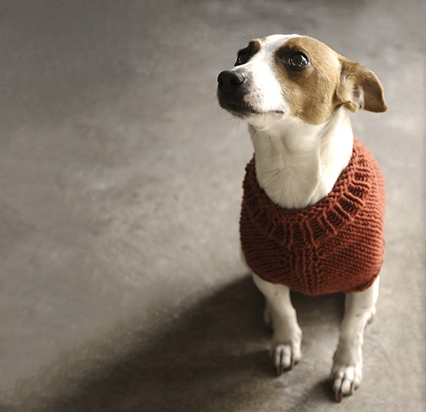 Battersea Dogs Home Knitting Pattern Dog Coat : The Juno Jumper knitting project by Alice Neal LoveKnitting
