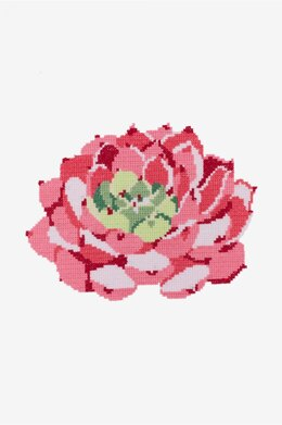 Pink Echeveria Succulent in DMC - PAT0560 - Downloadable PDF