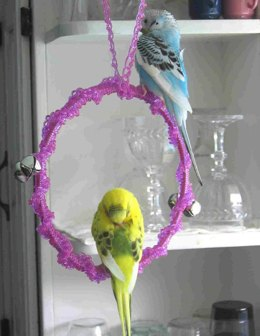 Parakeet Perchswing