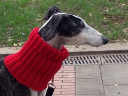 Eccentric Rib Greyhound Neck Snood