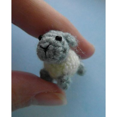 Oh, so tiny! Sheep