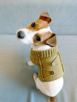 Buttoned Dog Sweater