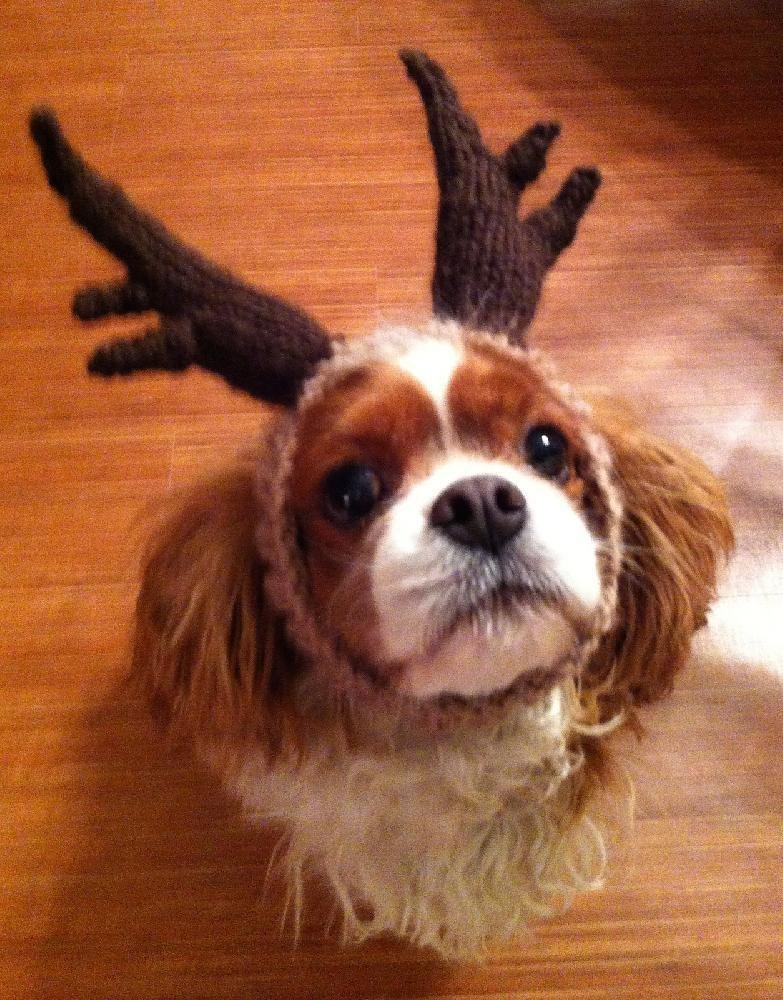 ROFL Dog Antlers Knitting pattern by ROFL Hat Factory  350a1250084
