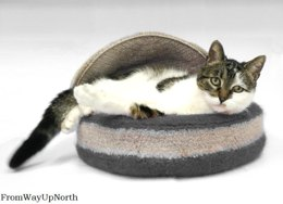 Paw-Purpedic Pet Bed - Felted
