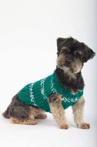 The Sports Nut Dog Sweater in Lion Brand Hometown USA - L32126